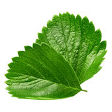 Strawberry leaf isolated on white Stock Photo
