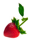 Strawberry with Leaf. Single ripe strawberry with stem and leaf against white. Isolated Royalty Free Stock Photos