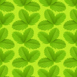 Strawberry leaf texture pattern. Plant ackground stock photo