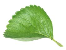 Strawberry leaf Royalty Free Stock Image