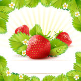 Strawberry with leafs Stock Image