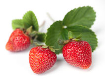 Strawberry with leaves Stock Images