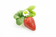 Strawberry with leaves and flower Stock Photo