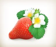 Strawberry with leaves and flowers Stock Images