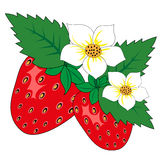 Strawberry with leaves and flowers Royalty Free Stock Photo
