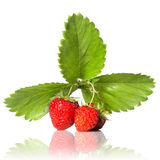 Strawberry with leaves isolated. On white royalty free stock photo