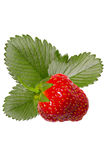 Strawberry with leaves on isolated background. One berry of strawberry with leaves on isolated background stock photography