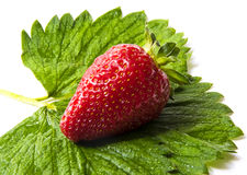 Strawberry with leaves. Isolated on a white background. Fresh strawberry with leaves. Isolated on a white background royalty free stock image
