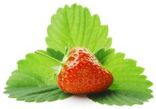 Strawberry with leaves Stock Photos