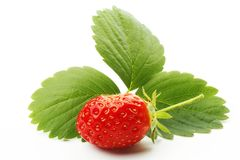 Strawberry with leaves Royalty Free Stock Photo
