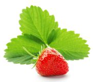 Strawberry with leaves Royalty Free Stock Photos