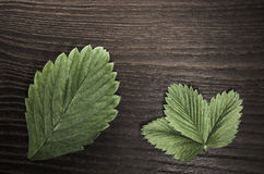 strawberry leaves on wood background Stock Image