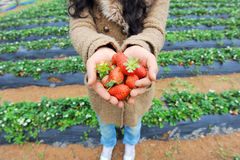 Strawberry lie in hands Royalty Free Stock Image