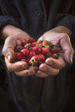 Strawberry lie in male hands Stock Photography