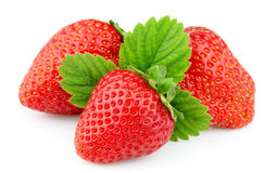 Strawberry with life Stock Images