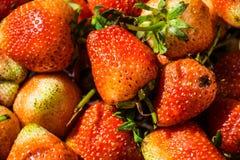 Strawberry , looks eating Stock Photos