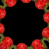Strawberry luxury. One abstract multiple strawberry background Stock Image