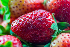 Strawberry macro closeup Royalty Free Stock Photo