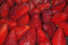 Strawberry macro. Fresh red strawberry macro detail Stock Photography