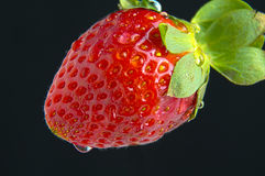 A Strawberry macro. A red juicy strawberry macro Stock Photography