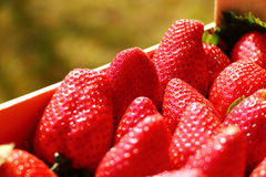 Strawberry macro. Macro view of many strawberries lying close to each others, hit by sun light Stock Photography