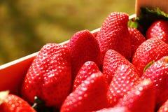 Strawberry macro Stock Photography