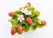 Strawberry made of Japanese soil Royalty Free Stock Images