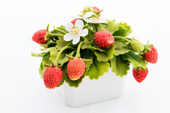 Strawberry made of Japanese soil Stock Photography