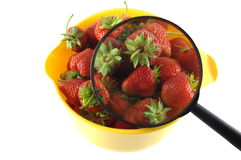 Strawberry with magnifier Royalty Free Stock Photos