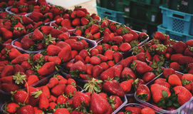 Strawberry market. Strawberries being sold during the Festa Frawli, an annual strawberry festival held in Mgarr, Malta Royalty Free Stock Image
