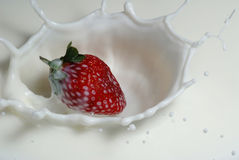 Strawberry in milk. Fresh strawberry falling into milk with splash Stock Images