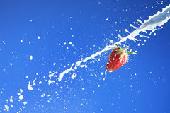 Strawberry in milk Royalty Free Stock Image
