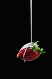 Strawberry and milk drops Stock Image