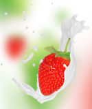 Strawberry with milk splash Stock Photography