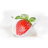 Strawberry milk or yogurt splash. Royalty Free Stock Photo