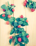 Strawberry and mint on wooden desk, toned. Effect Stock Photography