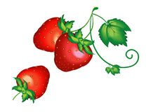 Strawberry,  model with  EPS file Stock Photos