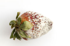 Strawberry with mold Royalty Free Stock Photos