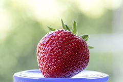 Strawberry on a motley background. Red, juicy, ripe strawberry on a motley background Royalty Free Stock Photos