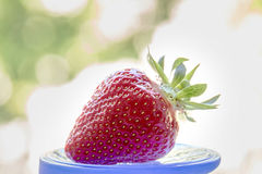 Strawberry on a motley background. Red, juicy, ripe strawberry on a motley background Royalty Free Stock Photo