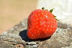 Strawberry on old wood Royalty Free Stock Images