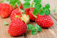 Strawberry and oregano Royalty Free Stock Photography