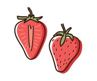 Strawberry outline illustration with watercolor effect. Vector doodle sketch hand drawn fruit illustration. Eps10 stock illustration