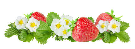 Strawberry over white background Stock Images