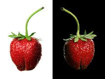 Strawberry pair Stock Photo