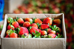 Strawberry in the paper box Royalty Free Stock Photos