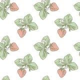 Strawberry pattern Stock Photography