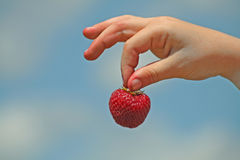 Strawberry Pick. A hand holding a fresh picked strawberry against a blue sky background Stock Photography