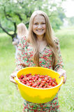 Strawberry picker Stock Image