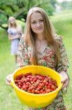Strawberry pickers Stock Photos